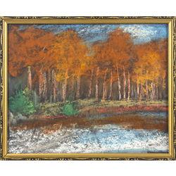 Saulriets mežmalā